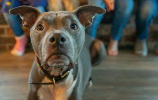 basic dog training nyc michael jackson dog training
