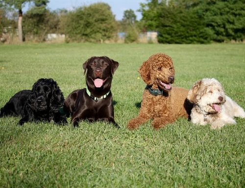 Give Your Pooch a Happier Life through Dog Training