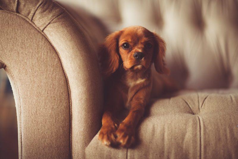 before-puppy-training-new-york-michael-jackson-dog-training-800x533