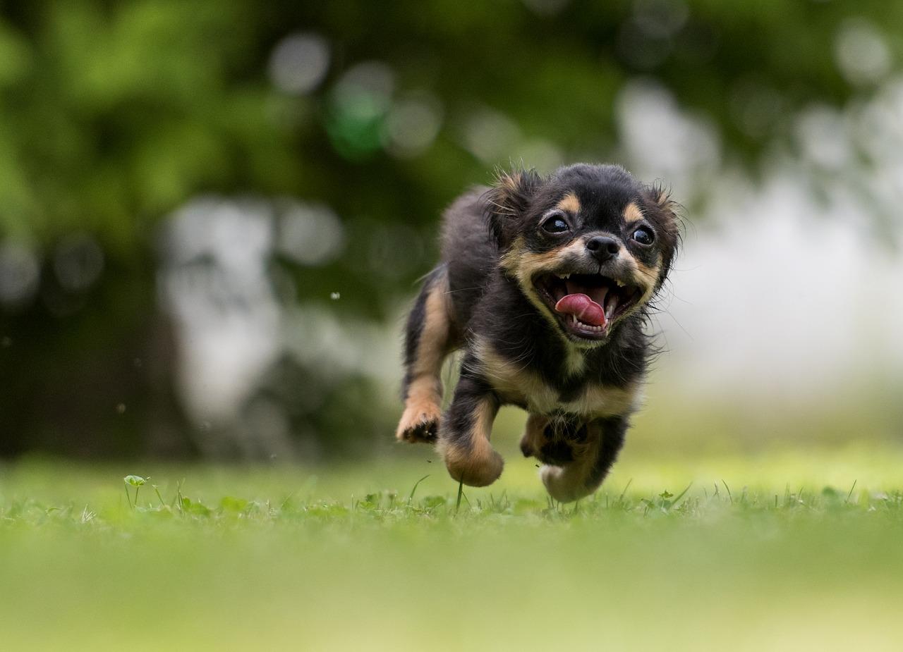 dog-training-blogspot-michael-jackson-dog-training-brooklyn-nyc